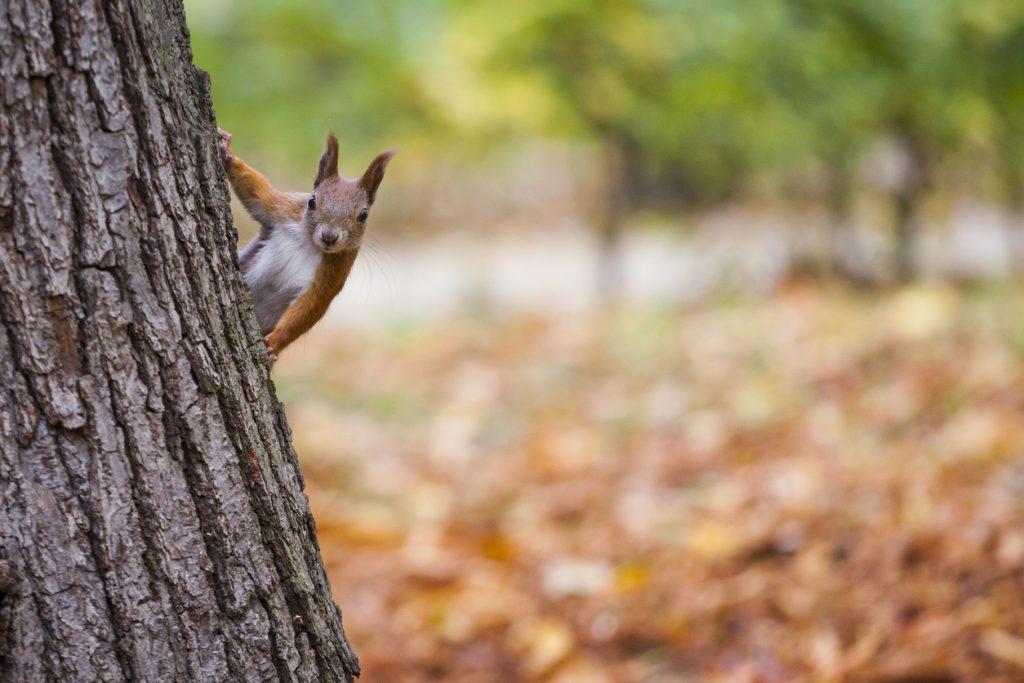 Summer Squirrel: My Allergen-Friendly Winter Meal Preparations